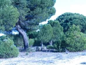 Terreno en alquiler en Polígono los Burros, nº 10