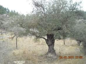 Terreno en Bufalvent