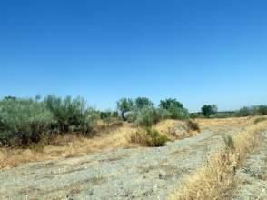 Terreno en calle Paraje Olivillo -S/N-