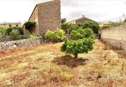 Terreny a Algaida