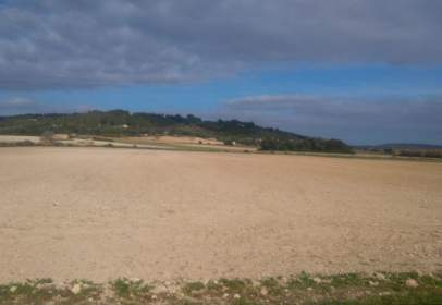 Terreny a Montuïri