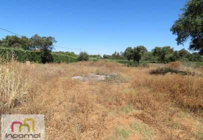 Terreno en Los Montitos-Área Carretera de Sevilla