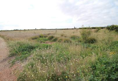 Terreny a Sagunto / Sagunt - Almardà