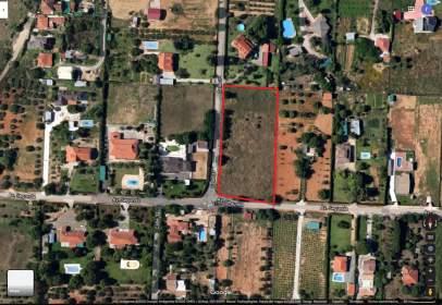 Land in calle Dehesilla de Calamón, nº sn