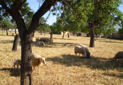 Rural Property in Consell