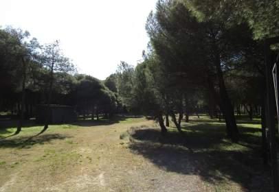 Terreno en Tierra de Pinares - Tudela de Duero