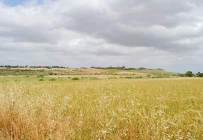 Terreno en Carretera Petra-San Joan, Km10 Pol3 Parc 119