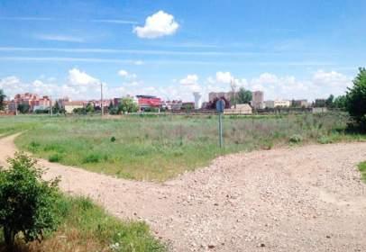 Land in calle del Gorrión