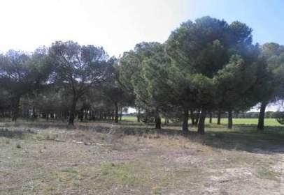 Terreno en calle La Dehesa Pol 9 Parc 5096