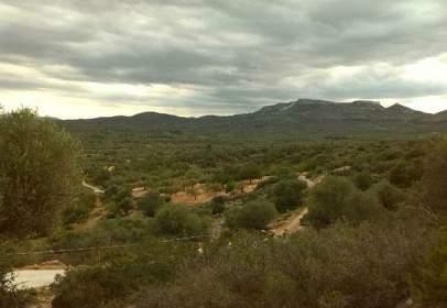 Terreny a Carretera Canet